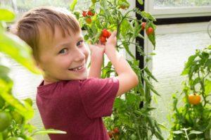 enfant qui jardine des tomates